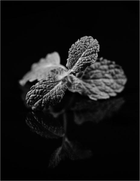 Muntblaadjes in zwart/wit op donkere achtergrond